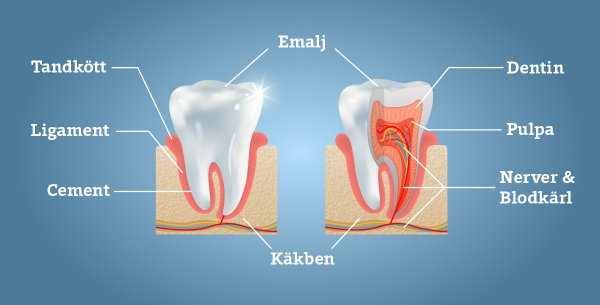 rotfylld tand värker